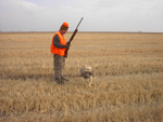 One of Golden Prairie's hunting dogs bringing in a bird as a hunter looks on.